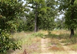 15% OFF: Oklahoma, Pushmataha County, 5.73 Acre Lake View Private Reserve. TERMS $350/Month